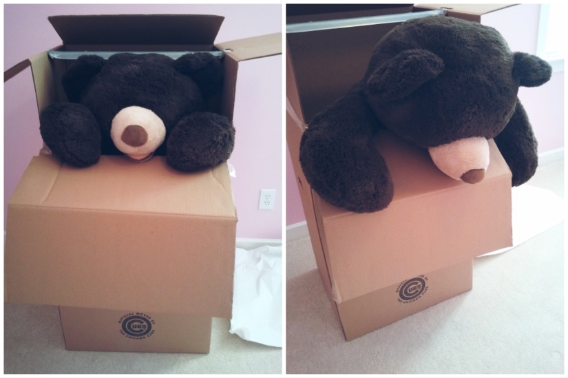 Side by side photo of large brown teddy bear first peering out of a large moving wardrobe box, then slowing starting to crawl out of the box.