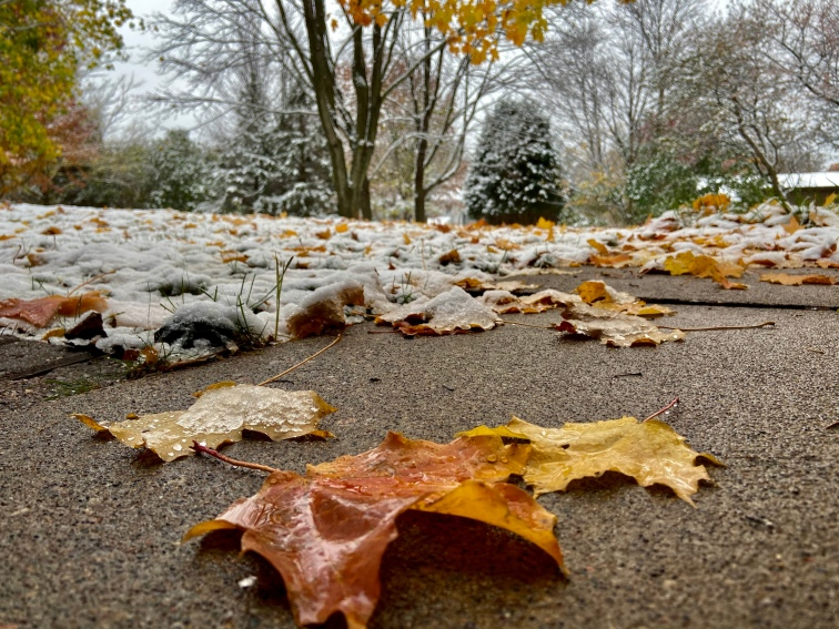 Crisp fall leaves frozen on the ground with the first snow of the season covering the yard