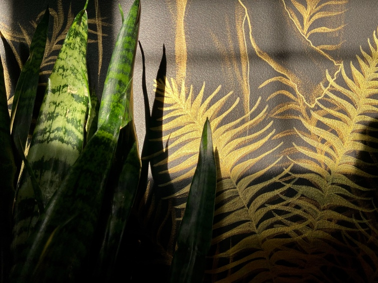Sunset hitting the top of a dark green snake plant, it's up against a black painted wall that has been adorned in golden fern fronds that sparkle in the sunlight