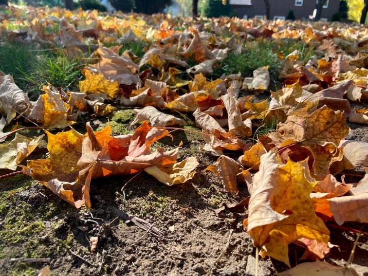 A ground level shot showing the fallen orange and red leaves sweeping across the ground